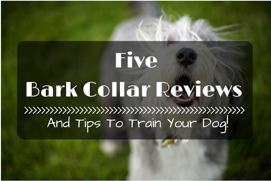 5 Best Bark Collar Reviews And Tips To Train Your Dog! - 2016