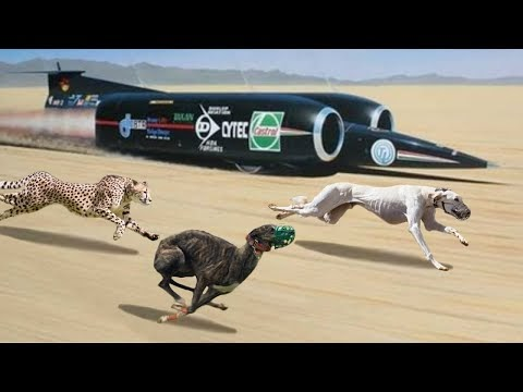 🔴The 10 Fastest Dog Breeds On This Planet