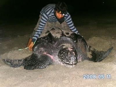 Hewan Terbesar yang Pernah Ditemukan di Indonesia 9 Hewan Terbesar yang Pernah Ditemukan di Indonesia