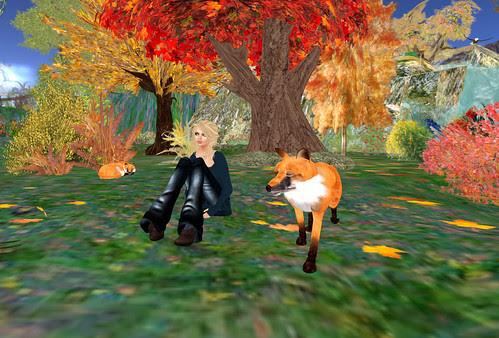 Shadow Brook - Hi foxes!
