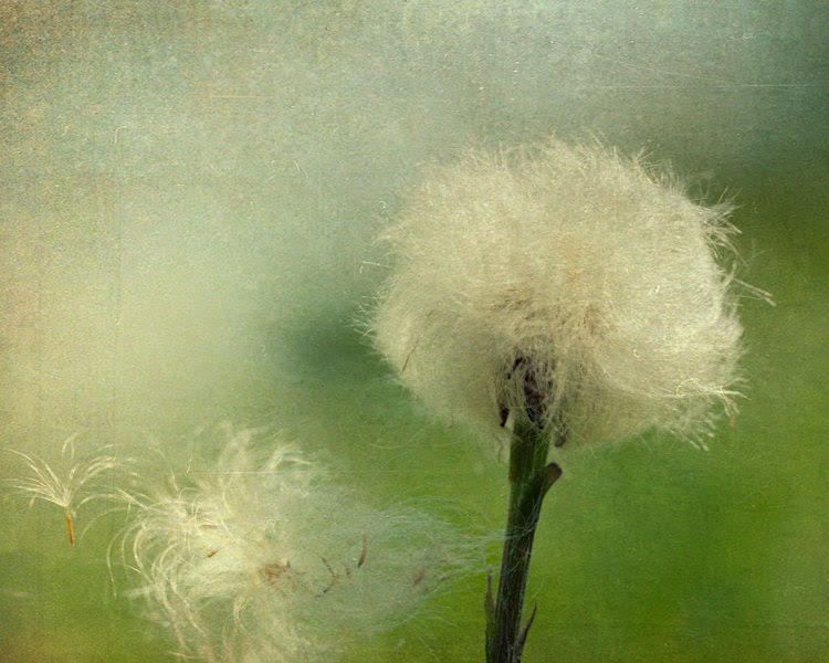33% OFF, CLEARANCE - Home decor emerald green dandelion photograph shabby chic flower photography flower art summer breeze