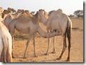 SOMALIA 236