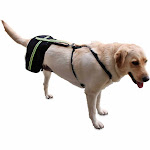 Walkin' Hip-EEZ Amputee System: the only hip support system to accommodate hind end amputees Right Amp - L