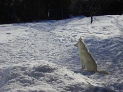 tala cody winter 09 015