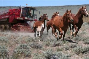 BLM's Wild Horse Harvesting Machine by John Holland