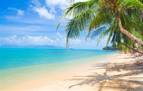 wallpaper sand sea beach  sun palm trees shore