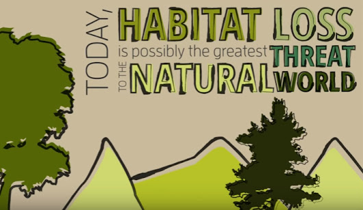 6 Solutions to Habitat Destruction - Vision Launch