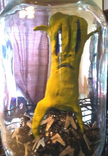 01. Entomophage Kangii