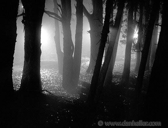 nite-tree-shadows-2.jpg