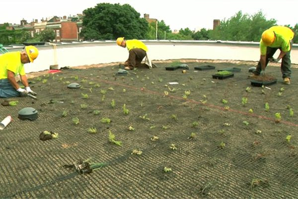 green roof 5