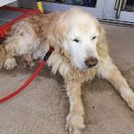 Saint-Léger-sur-Dheune | Un agent communal sauve un chien de la noyade