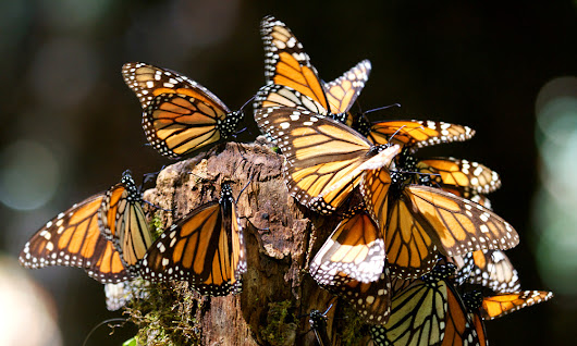 WWF Monarch Butterfly Adventure Giveaway | World Wildlife Fund