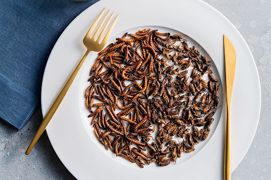 delicious. on Sunday reveals why crickets are the new superfood - News + Articles - delicious.com.au