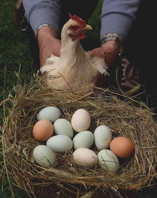 Resultado de imagem para ovos verdes