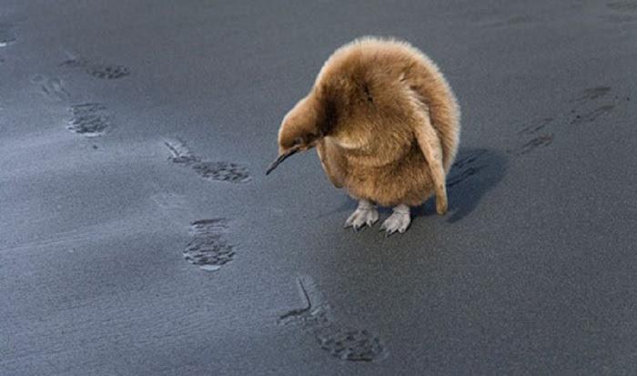 wildlife-image (700x413, 72Kb)