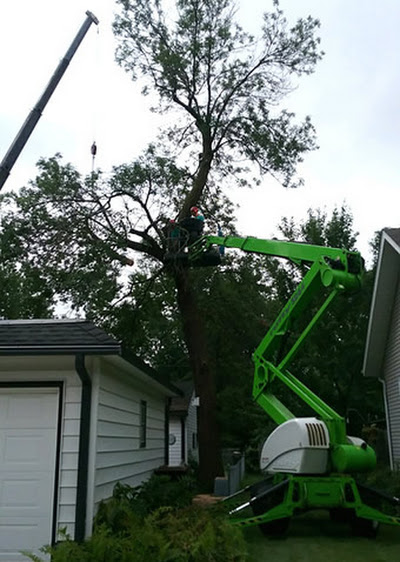 Tree Trimming : Tree Removal