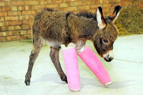 Οι 50 καλύτερες φωτογραφίες ζώων του 2012 (42)