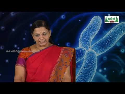 முப்பரிமாணம் Std 12 TM Bio Botany Classical Genetics Kalvi TV