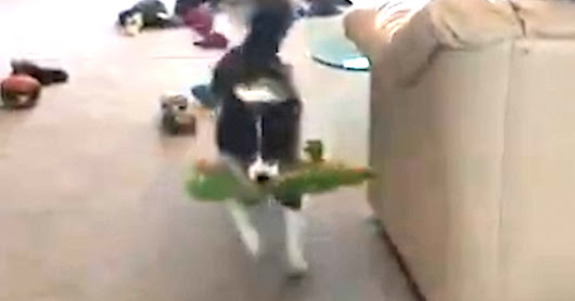Smart Dog Knows All Her Toys By Name