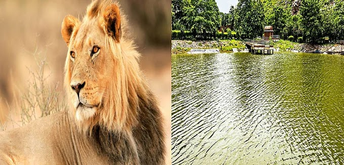 गुजरात से मंगाए गए छह शेर, 600 रुपये में करें राजगीर, नालंदा और पावापुरी की सैर, जानें बुकिंग का तरीका