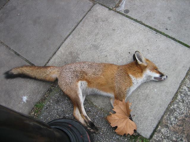 London, UK - Christmas & Dead Fox