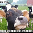 Image: 1000+ images about cows funny on Pinterest | Cow, Funny Cows and A Cow