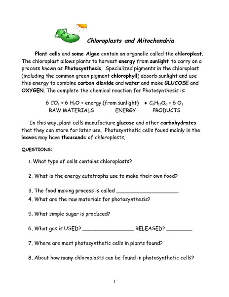 Photosynthesis And Chloroplast Diagram Worksheet Answers Aflam