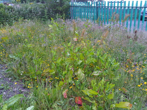 Marley Hill allotment bed two June 2011