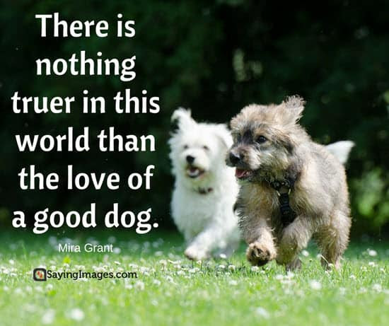 50 Dog Quotes For People Who Love Dogs  SayingImages.com