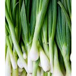 Bunching Onion Evergreen
