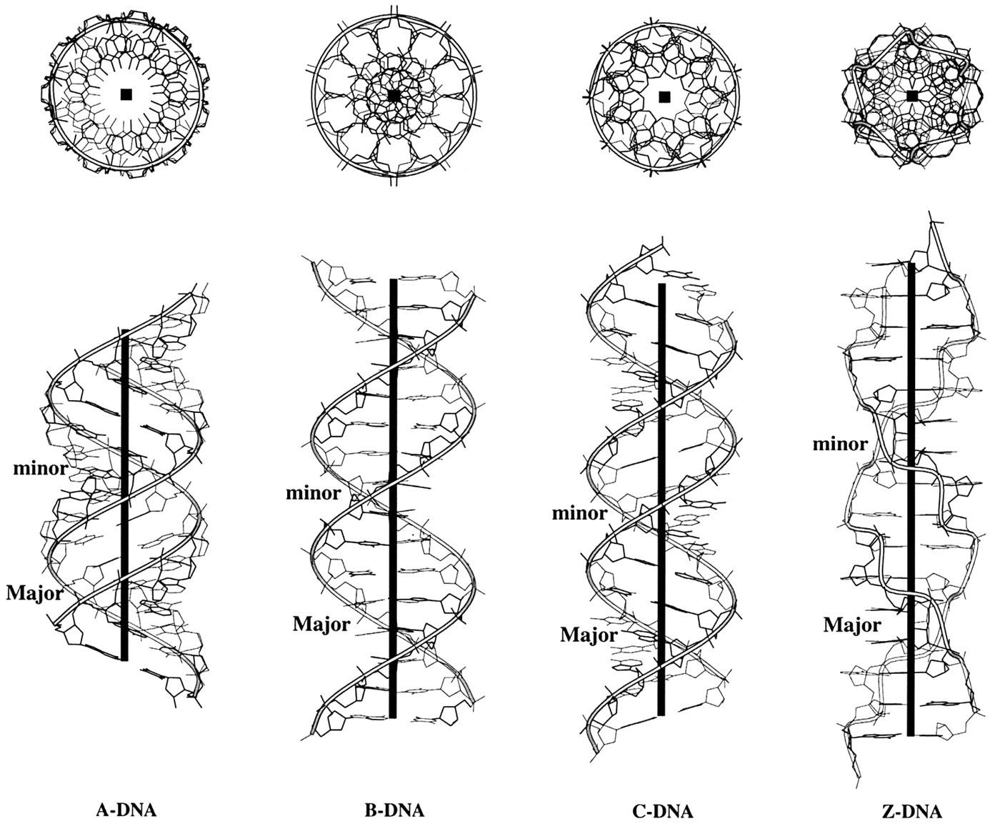 Phosphorus DNA Photo 3