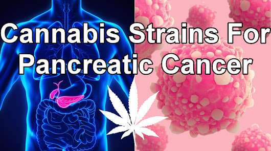 Cannabis Strains For Pancreatic Cancer