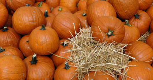 Things to Do in New Haven County During Fall - Living In Greater...