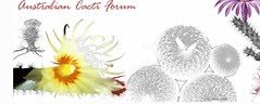 Australian Cacti Forum/
