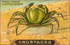 crustacés 9