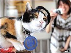 Tama on duty at Kishi station