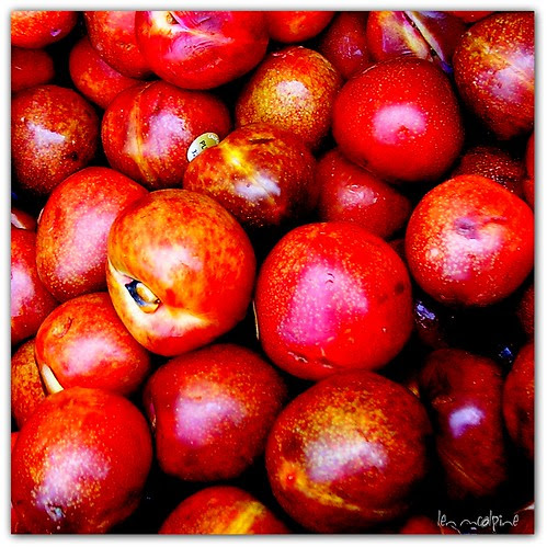 Pluots by Old Jingleballicks