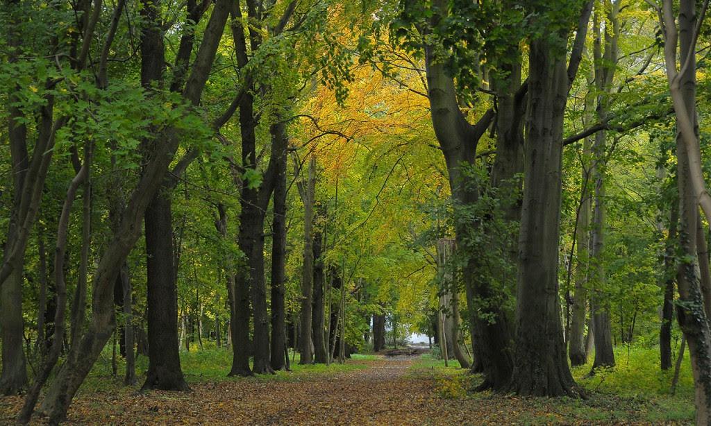 Chaubet Eau Vert Paysage Cration Et Entretien Jardins