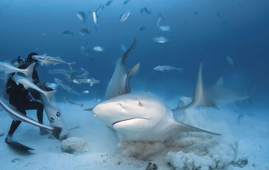 Scuba Diving with Bull Sharks in Playa del Carmen, Mexico