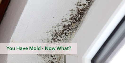 You Have Mold – Now What?