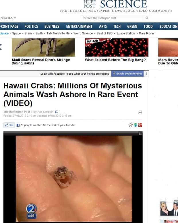 Milhares de larvas de caranguejos foram encontradas em praias do Havaí, nos Estados Unidos. (Foto: Reprodução/The Huffingtton Post)