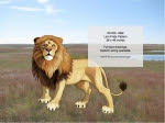 Lion Pride Pattern - fee plans from WoodworkersWorkshop® Online Store - lions,big cats,animals,wildlife,african,yard art,painting wood crafts,scrollsawing patterns,drawings,plywood,plywoodworking plans,woodworkers projects,workshop blueprints