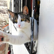 Keeping Your Cat Safe from Falling Out of High Windows