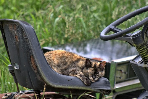 Tortie On A Tractor
