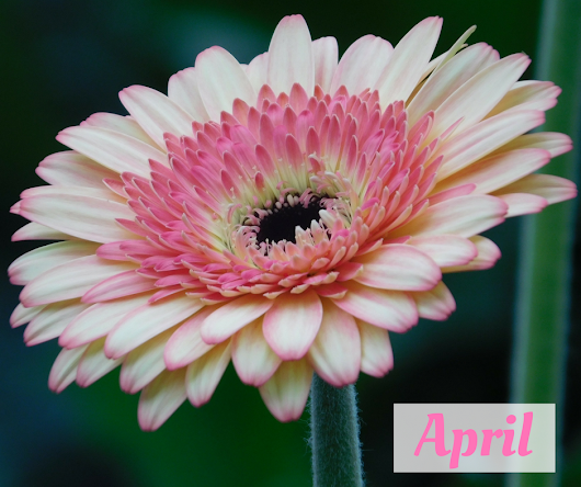 Easter flowers, Spring weddings & our new staff - April 2017 Edition of the Booker Flowers and Gifts Newsletter