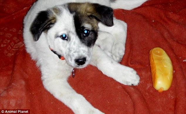 Iraq dog Justin Rollins