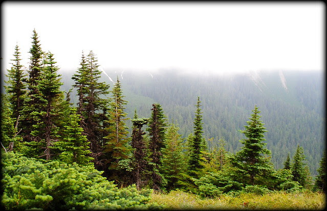 Back below the cloud cover - McNeil Point Trail - Mt. Hood