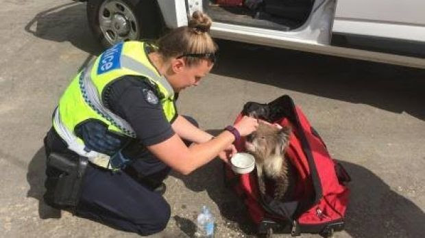 Constable K. Bear, who was rescued at Wye River.