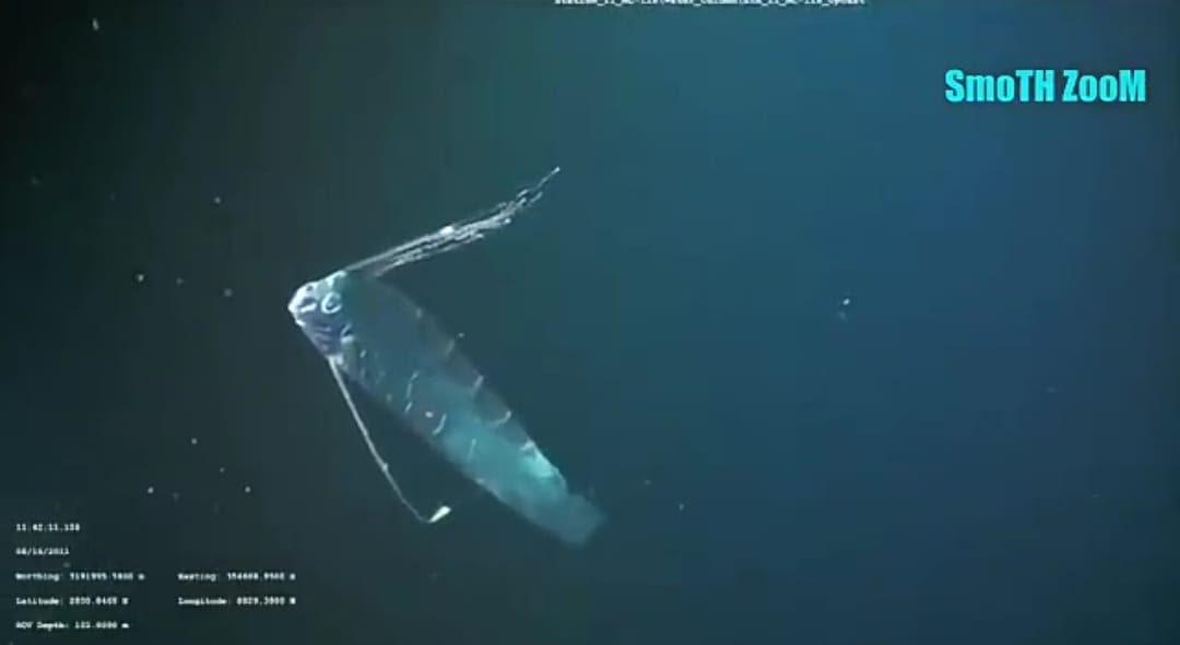 72 Gambar Hewan Laut Purba Terbaru