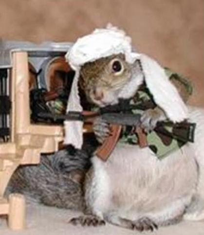 Wacky Weds: Them Darn Squirrels